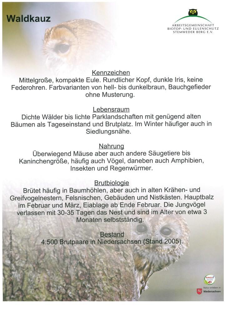 Waldkauz_2