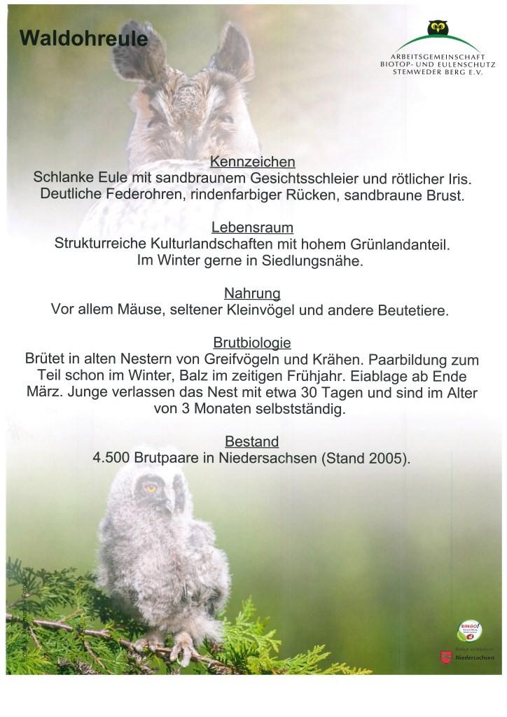 Waldohreule_2